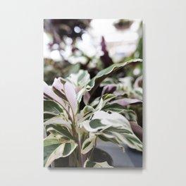White Fusion Calathea  |  The Houseplant Collection Metal Print