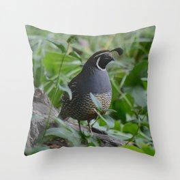 mr quail Throw Pillow