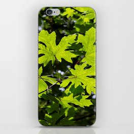 Sun-Dappled Forest in the Spring iPhone Skin