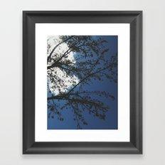spring in sacramento Framed Art Print