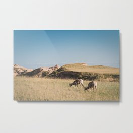 Bighorn Sheep in the Badlands Metal Print
