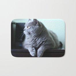 British shorthair fat cat indoor portrait. Bath Mat