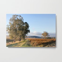 Barossa Valley Autumn Sunshine Metal Print