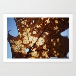 Sunlight through a crackled Autumn Leaf Art Print