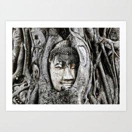 Buddha head entwined in Banyan tree roots. Art Print