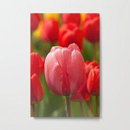 colourful tulips II Metal Print