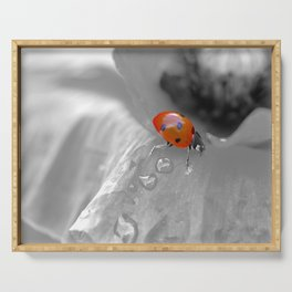 Macro ladybug with water drops on a poppy Serving Tray
