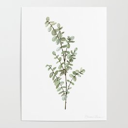 Baby Blue Eucalyptus Watercolor Painting Poster