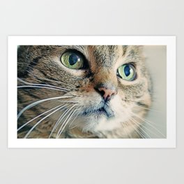 My Sweet Lilly the Cat Art Print