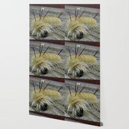 Fuzzy Yellow Caterpillar Face Wallpaper
