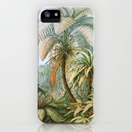 Vintage Fern and Palm Tree Art - Haeckel, 1904 iPhone Case