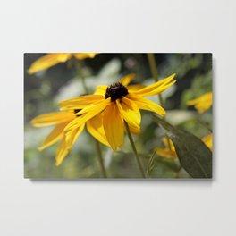 Beckie - rudbeckia flower Metal Print