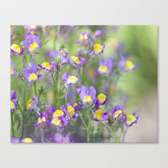 Smell of Summer Beginning Canvas Print