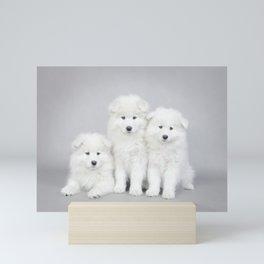 Samoyed puppies Mini Art Print