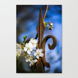 Rust and Flowers- Bonn, Germany Canvas Print