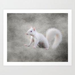 Albino Squirrel Art Print