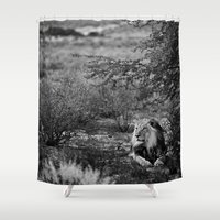 south africa Shower Curtains featuring Male Lion, Kgalagadi, South Africa by Shannon Wild