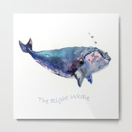 Rigth Whale artwork Metal Print