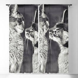 Cute cats who are curious about each other! Blackout Curtain