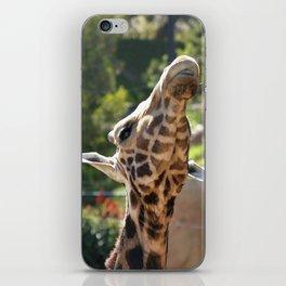 Baringo Giraffe iPhone Skin