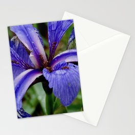 Stunning Microcosm Stationery Cards