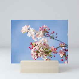 Crabapple blossoms Mini Art Print