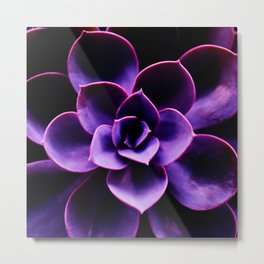 Ultraviolet Succulent Plant #decor #society6 #homedecor Metal Print