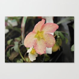 Beauty Part 2 Canvas Print