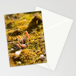 Macrocosmo Stationery Cards