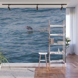 Cute Puffin takes off from the water Wall Mural