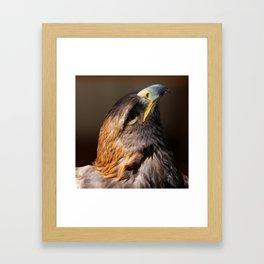 Golden Eagle | Raptor | Birds | Nature | Animal Framed Art Print