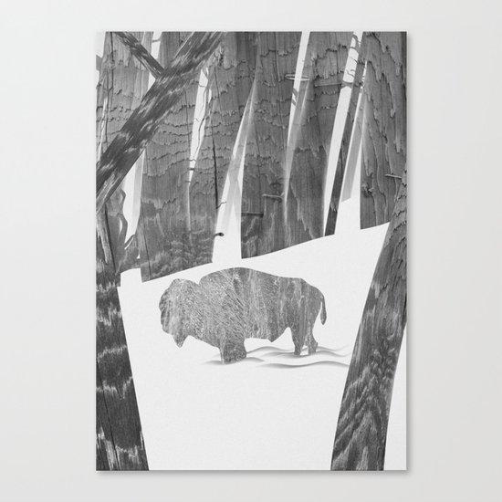 Martwood Bison Canvas Print