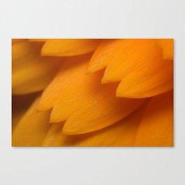 Orange Forever Canvas Print