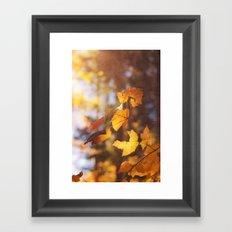 sun soaked autumn Framed Art Print