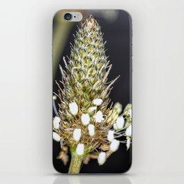 Buckhorn flower top close up iPhone Skin
