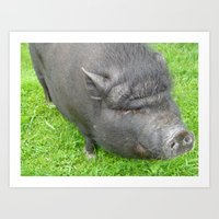 pigs Art Prints featuring Pigs by jls364
