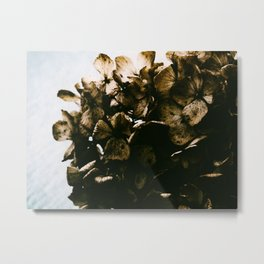 Dried Metal Print