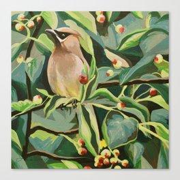 Cedar Waxwing Canvas Print