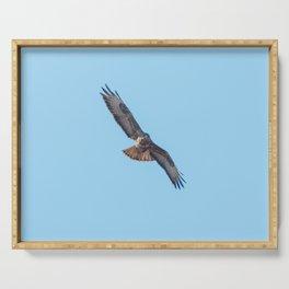 Common Buzzard (Buteo buteo) in flight  blue sky Serving Tray