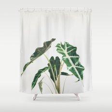 Elephant Ear Shower Curtain