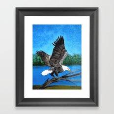 Bald eagle  2 Framed Art Print