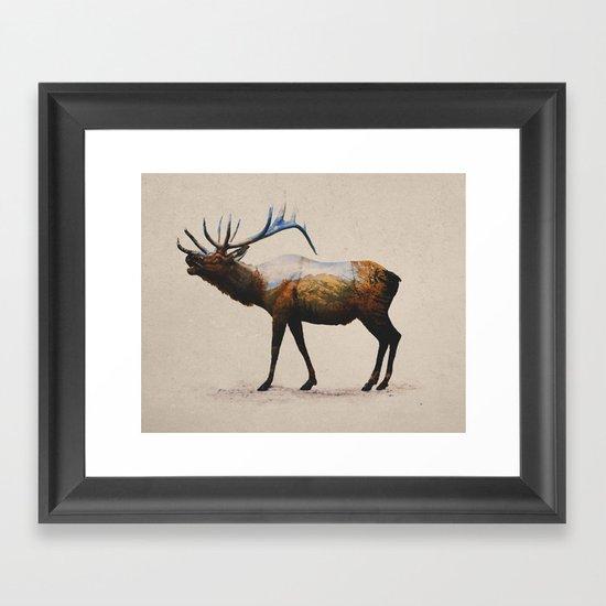 The Rocky Mountain Elk Framed Art Print