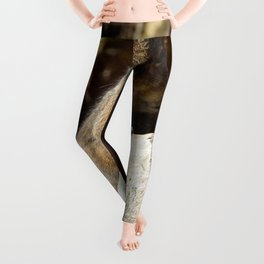 Cute Squirrel by Teresa Thompson Leggings