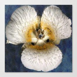 Mariposa Lily 2 Canvas Print