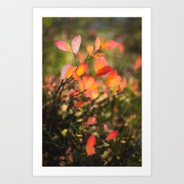 Small tree leaves in the forest with autumn colors Art Print