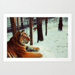 Winter afternoon Art Print