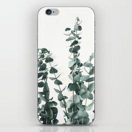 Eucalyptus Leaves iPhone Skin