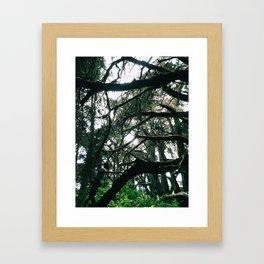 Spider Web Trees Framed Art Print