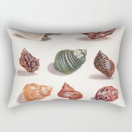 Unknown Title by Maria Sibylla Merian // Vintage Sea Shells Colorful Shapes and Sizes with Shadows Rectangular Pillow