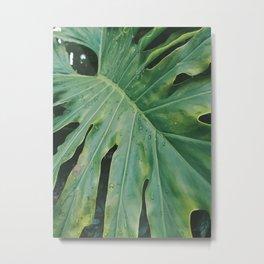 Plantae III Metal Print